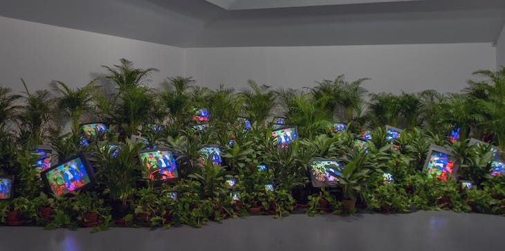TV Garden (1974–77), Nam June Paik, installation view at the Kunstsammlung Nordrhein-Westfalen, Dusseldorf in 2002