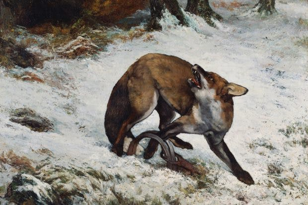 Fox Caught in a Trap (1860), Gustave Courbet. National Museum of Tokyo.