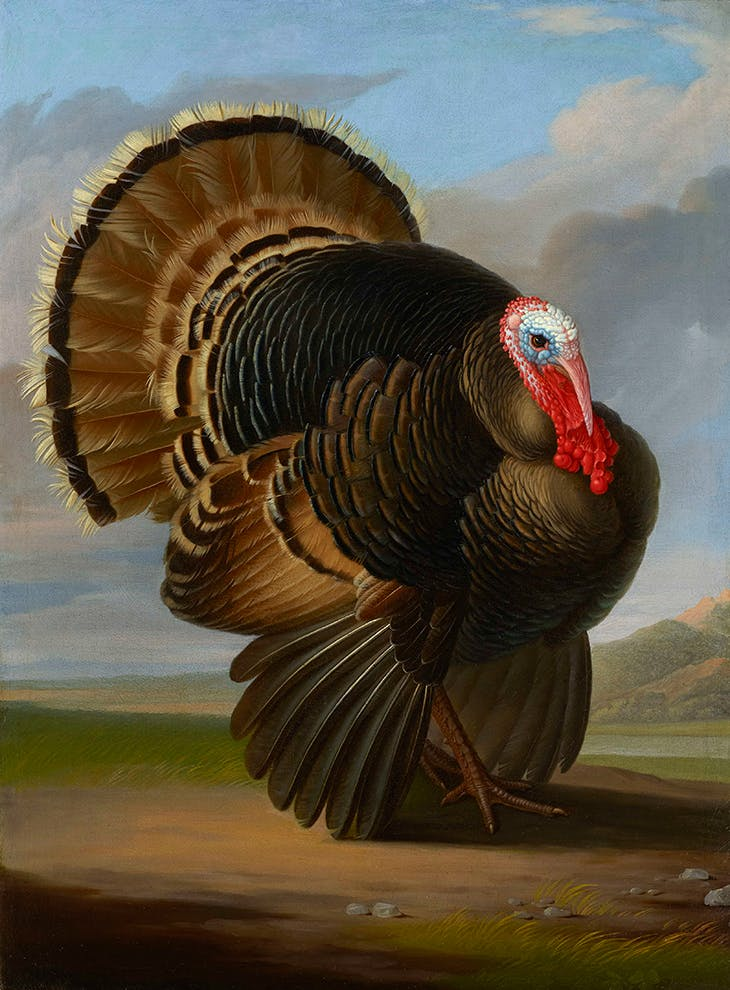 Wild Turkey (c. 1800), Peter Wenzel.