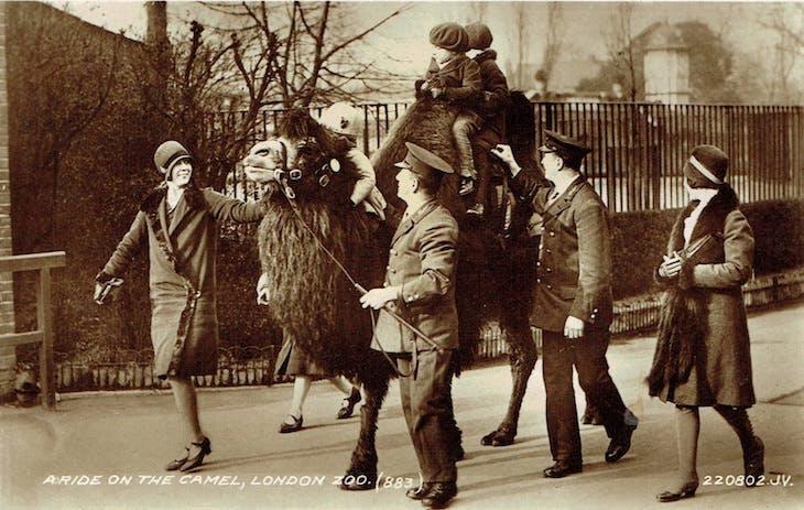 Riding on a camel (1920s), postcard.