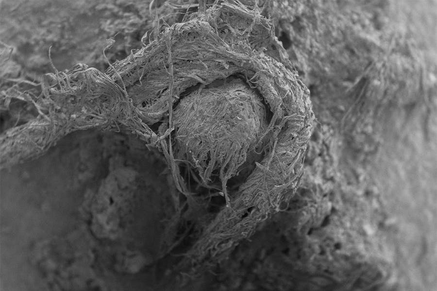 A scanning electron micrograph (SEM) of the cord fragment found at Abri du Maras.