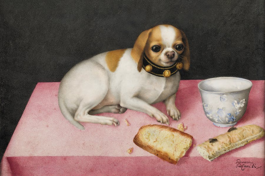 Lapdog with Biscotti and a Chinese Cup (c. 1648), Giovanna Garzoni. Gallerie degli Uffizi, Florence