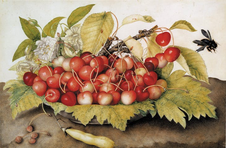 Plate with Cherries, a Bean Pod and a Bee (c. 1655–62), Giovanna Garzoni.