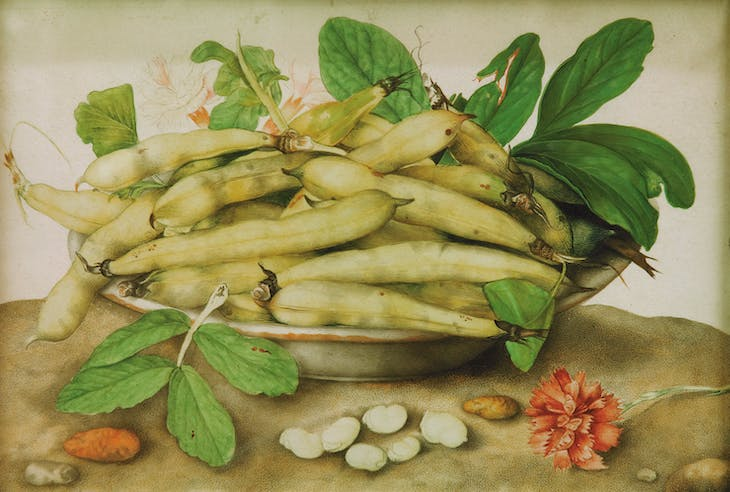 Plate of Fava Beans with a Carnation (c. 1655–62), Giovanna Garzoli.
