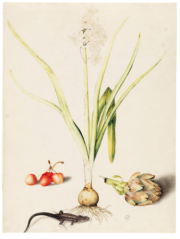Hyacinth with Four Cherries, a Lizard, and an Artichoke (c. 1648), Giovanna Garzoni.