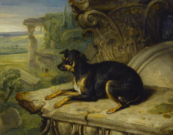 Fanny, a Favourite Dog (1822), James Ward.