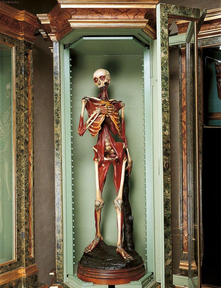 Anatomical model, 1742–51, Ercole Lelli. Museo di Palazzo Poggi, Bologna