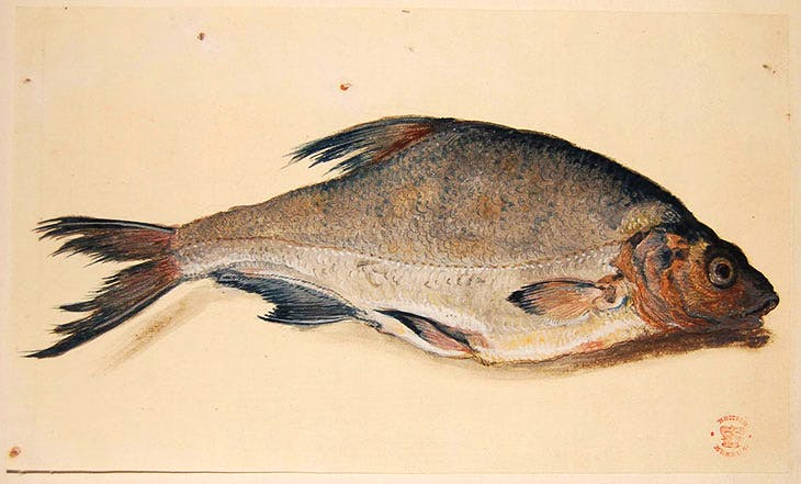Bream (c. 1600–20), possibly by Aert Spiering.