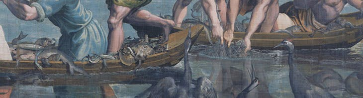 Something fishy: the eponymous creatures in Raphael's Miraculous Draught of Fishes