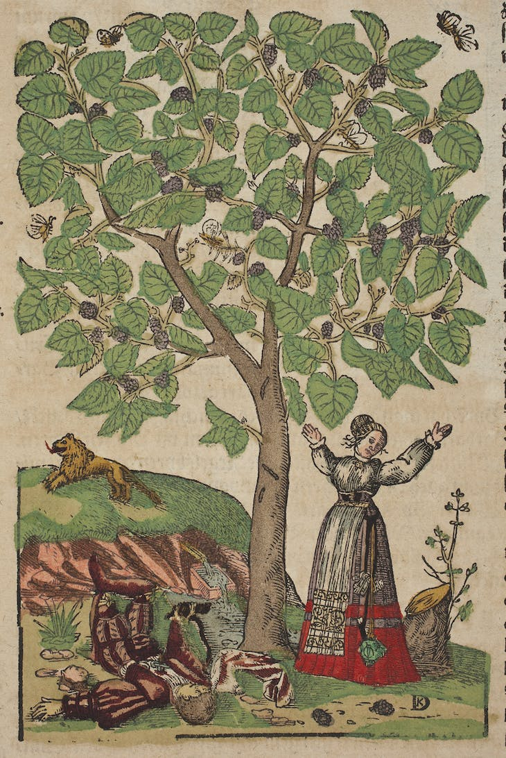 Woodblock illustration by David Kandel from an edition of Hieronymus Bock's Kreuterbuch (1546), depicting Pyramus and Thisbe beneath a mulberry tree.