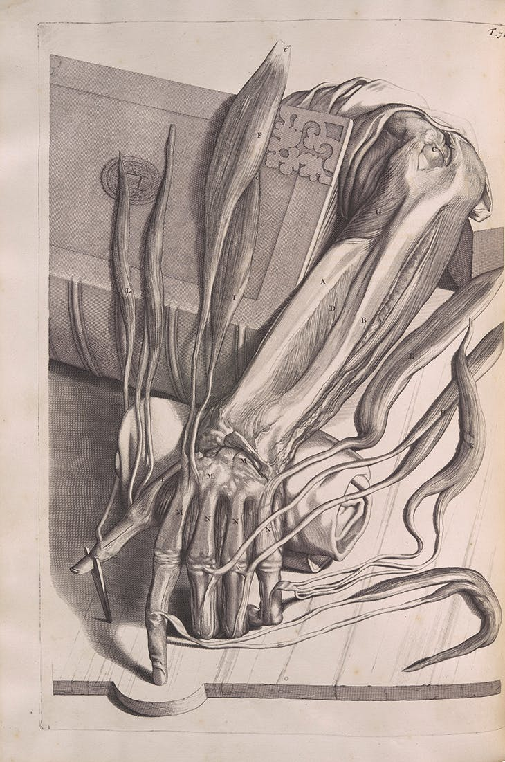 Anatomia humani corporis centum cinque tabulis...illustrata , by Govard Bidloo, published in Amsterdam, 1685, with engravings by Abraham Blooteling after drawings by Gerard Lairesse. Photo: by kind permission of the Syndics of Cambridge University Library