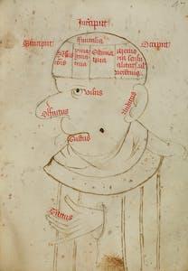 Diagram of the brain and senses in the Pseudo-Augustine De spiritu et anima (mid 13th century). Trinity College, Cambridge.