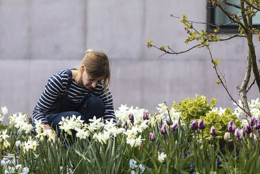 Gardener Katy Merrington at the Hepworth Wakefield.