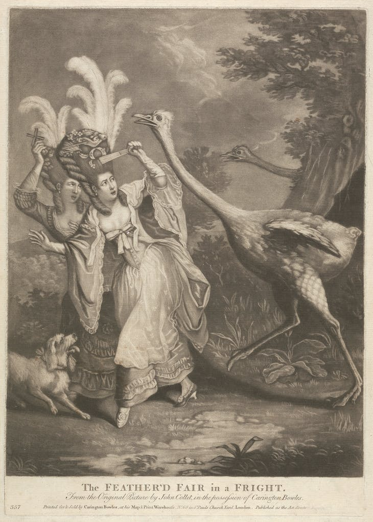The Feather'd Fair in a Fright (1770s), after John Collet.