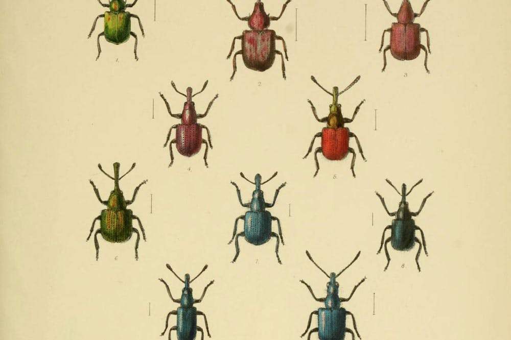W. W. Fowler, The Coleoptera of the British Islands, Vol. 5, 1891. China Blue is visible on the bottom left.