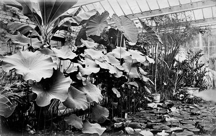 The Water Lily House at Oxford Botanic Garden, photographed in 1870