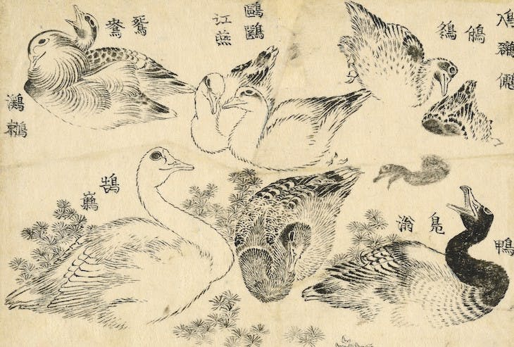 'Various aquatic birds', from the Great Picture Book of Everything (1820s–40s), Katsushika Hokusai.