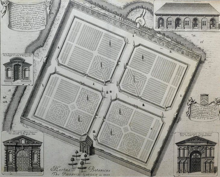 Engraving of the Oxford Physic Garden, England , David Loggan, printed in Oxonia Illustrata (1675). Science Museum Group Collection.